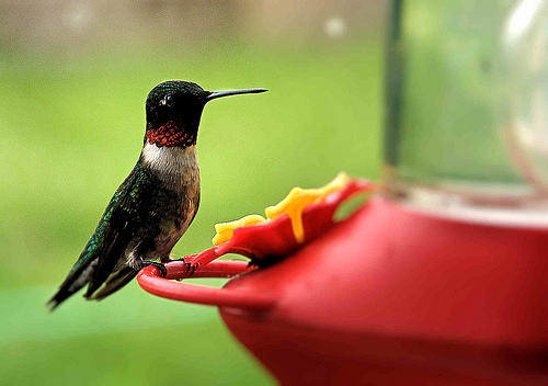 This crazy humming bird =)